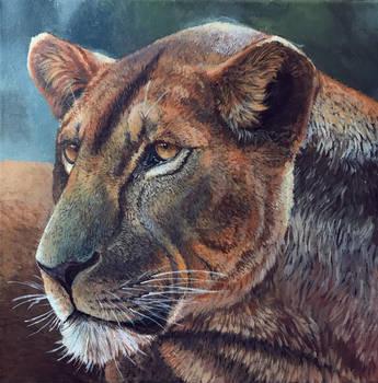 Lioness by Minionwolf711