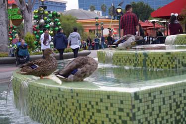 Ducks of Downtown Disney by Akarui-Sakura