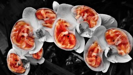 Fetal Orchids II by Soltis