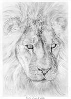 Lion by Mguin