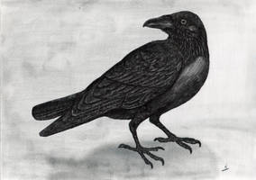The Raven by AlvaroGJ