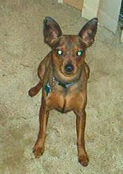 my doggy, Bizkit by Meandmyshadowclones