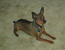 my doggy Bizkit 2 by Meandmyshadowclones