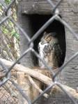 Sleeping Owl by happydoo2