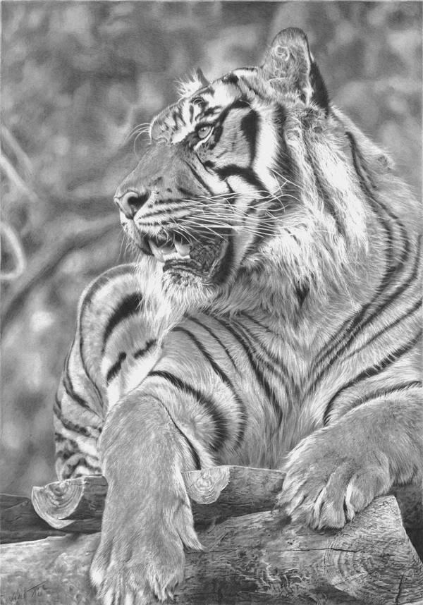 I am the Tiger by Ileina
