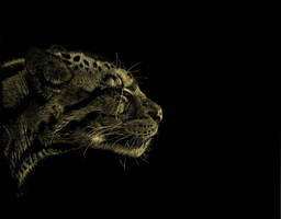 Clouded Leopard by Ileina