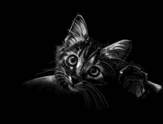 Kitty by Ileina