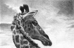 Giraffe by Ileina