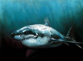 Great White Shark by Ileina