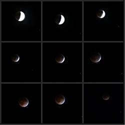 April 15, 2014: Tomato Moons by pickymice