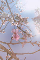 La Vie En Rose by bunnylavi
