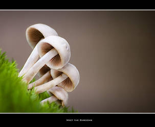 Meet the Shrooms by Bavenmark