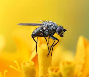 Tiny fly by agiaco