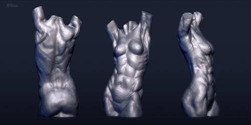 Anatomy 2013 - Female Torso by CoffeeAndMarkers