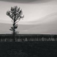 Big Tree by kapanaga