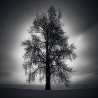 Hermitage Tree by kapanaga