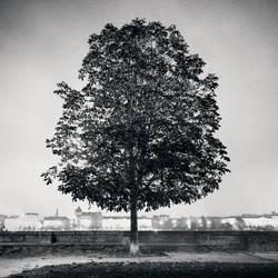 Kampa Island Tree by kapanaga
