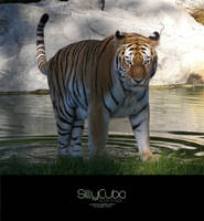 Tiger 2 by SillyCuba