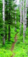 Wandering Path by xXRavenSongXx