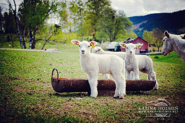 Lamb IV by Choro-phobia