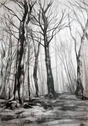 the bald trees by Katarzyna-Kmiecik