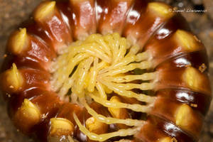 Swirling vortex by dllavaneras