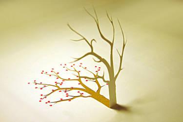 Cherry tree by seeschloss