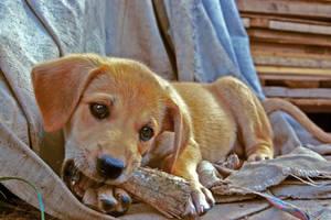puppy by djeckie