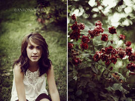 The Wild Roses by CameraDude