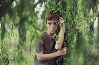 Willows by CameraDude