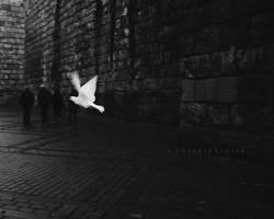 Dove by CameraDude