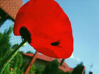 poppy by profuturo