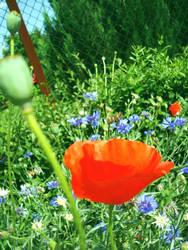 poppy blue by profuturo