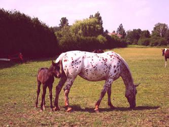 fowl and mama-horse by profuturo