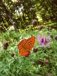 butterfly by profuturo