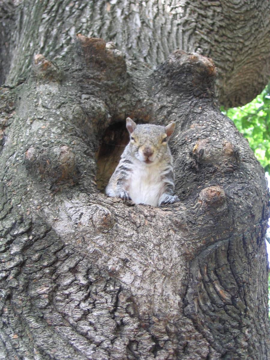 Boston's squirrel 4 by Zazou8