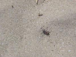 Beach's bug by Zazou8