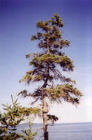 Just a tree... by Zazou8