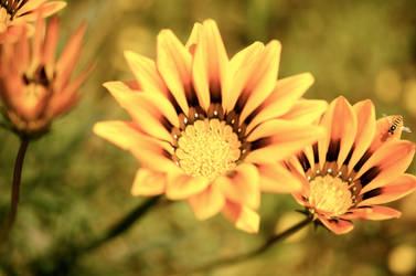 Life in Bloom by Cherose77