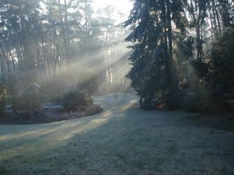 Morning mist by aaakker
