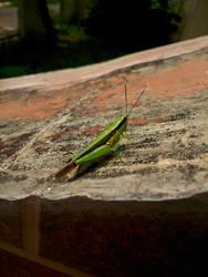 Grasshopper by Reidza