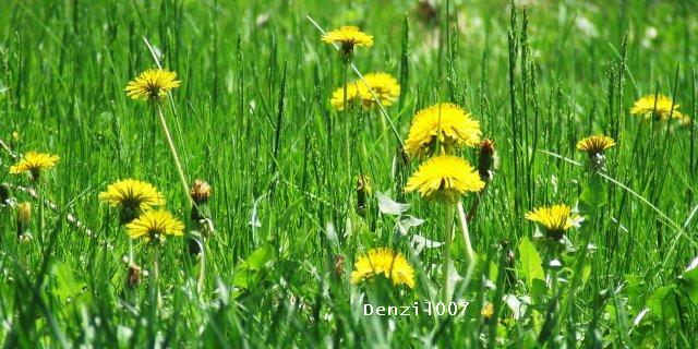 Summer Days!!! by Denzil007