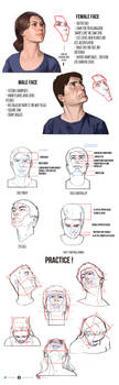 Cheat sheet for drawing heads by mannequin-atelier
