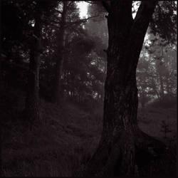Dark Wood by Koptelov