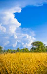The Meadow by rctfan2
