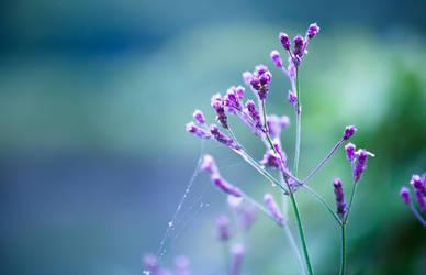 Bouquet by rctfan2