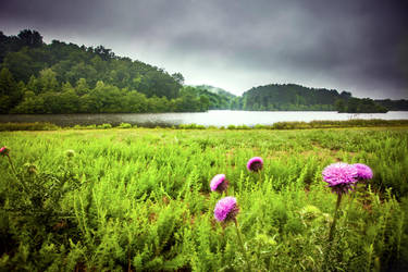 Thistle by rctfan2