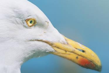 Bird face by Ramdabam