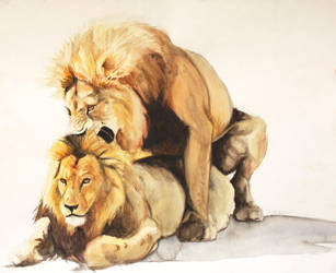 Male Lions by kcreeves