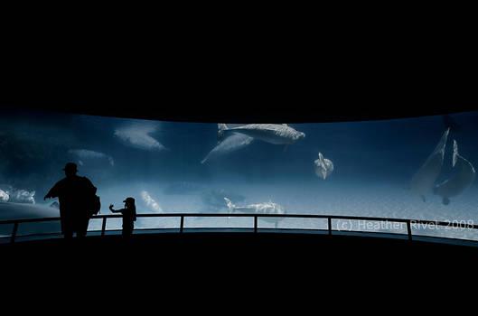 The Beluga Dance by HeatherWaller-Rivet